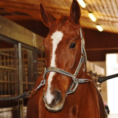 pferde-behandlung-gesundheit-therapie-stall-vor-ort