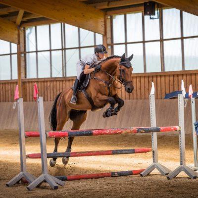pferde-physiotherapie-osteophatie-springreiten-sprungpferde-dressur